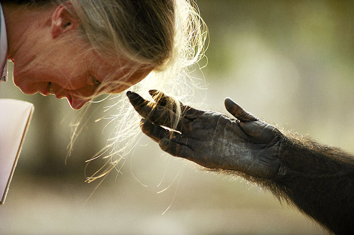 jane goodall - michael nick nichols - grandi fotografi national geographic